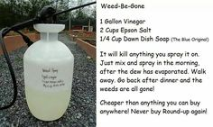 Home made weed-be-gone. And safe for use in yards with pets and kids. Outdoor Gardens, Shampoo, Personal Care, Bottle, Beauty, Beleza, Self Care, Body Care, Flask