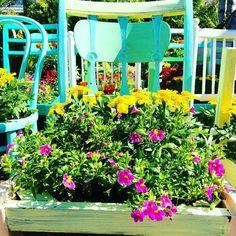 Kuin karkkeja! Kukat pääsi tuoliin istumaan.  #kukkatuoli #järvenpää #hyväjäke kiitos @jkukkatalo ahkerat puutarhurit! Torstaina 9.6. kukka-aidalla #talkoot #tervetuloa!