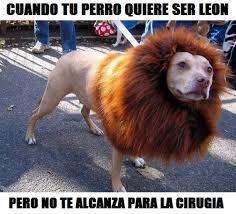 Perro Leon Perros Perros Salvajes Memes Divertidos