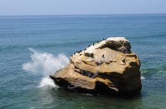 Waves crash on this enormous rock located in San Diego, CA.  The birds don't seem to be bothered by the water though, not with that view.