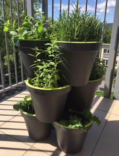 Lag en urtehage med 9 ulike urter