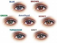 On this page we discuss the best colored contacts for different eye types (brown green blue hazel eyes) types of contact lenses brands with the best colored(I WANT GREEN) contacts and how to choose the best colored contacts. Types Of Contact Lenses, Contact Lenses For Brown Eyes, Natural Contact Lenses, Coloured Contact Lenses, Green Contacts Lenses, Eye Contacts, Freshlook Contacts, Purple Contacts, Lenses Eye