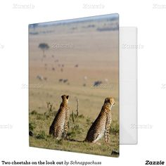 Two cheetahs on the look out 3 ring binders