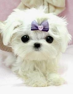 Cute Puppy with a Bow