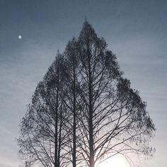 my photograph ©an_ism // #sky #tree #nature #moon #dusk