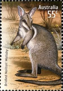 Australia - Wallaby