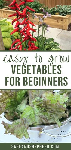 Here are the top 8 easy to grow vegetables for beginners that you will be able to harvest in no time! Starting A Vegetable Garden, Vegetable Garden For Beginners, Gardening For Beginners, Gardening Tips, Easy Vegetables To Grow, Raised Garden Beds, Garden Planning, Harvest, Top