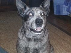 I am grateful for the time i had with my dog Axel, 2005 - 2014