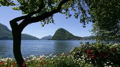 The Ciani Park is Lugano's green pearl. Located near the city centre and fronting on Lake Ceresio, it covers a surface of square meters. Travel Center, Lake Mountain, Wonderful Picture, Swiss Alps, Places Of Interest, Beautiful Landscapes, Switzerland, San, Mountains