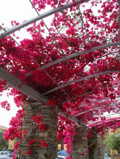 This is what I want to do to the patio cover, I want to create a privacy screen using a trellis where the bougainvillea can grow all the way throughout the roof of the patio top.
