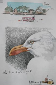 Drawing Journal, Watercolor Sketchbook, Watercolor Bird, Art Sketchbook, Water Sketch, Art Journal Challenge, Bird Sketch, Nature Drawing, Color Pencil Art