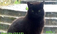 Please help us find Felicita the Cat missing in the dn140px area. For more details click http://j.mp/1wbG1Nz
