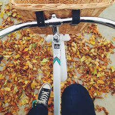Fall bike rides.