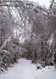 Talvinen maisema lumi latu hiihtolatu puutarhablogi