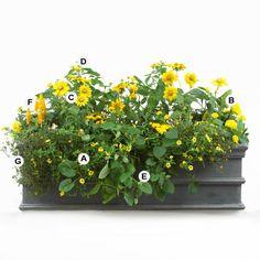 Top Butterfly Container Garden Ideas: Plant in Yellow: A. Calibrachoa 'Superbells Saffron' -- 4;  B. Marigold (Tagetes 'Discovery Yellow') -- 2;  C. Black-eyed Susan (Rudbeckia 'Irish Eyes') -- 3;  D. Lantana 'Lemon Drop' -- 3;  E. Black-eyed Susan vine (Thunbergia alata) -- 1;  F. Lollipop flower (Pachystachys lutea) -- 1;  G. Creeping zinnia (Sanvitalia procumbens) -- 2
