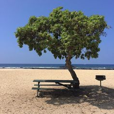 """Stop and listen. Our world is loud. People are busy. If we want to hear God we've got to be still and listen. """"There's no limit on what God wants to talk to us about""""  #thisweekinlecture #ywamkonacontest #photogenx #ywam #hawaii #trees #beach #potd #nature @ywamkona by joshbroo http://bit.ly/dtskyiv #ywamkyiv #ywam #mission #missiontrip #outreach"""