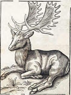 Topsell's The History of Four-footed Beasts and Serpents Woodcuts: Fallow Deer Fallow Deer, Popular Art, Animal Drawings, Drawing Animals, Medieval Art, Gravure, Graphic Illustration, Illustrations, Antlers