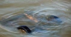 «Лада Приора» упала с парома на Керченской переправе