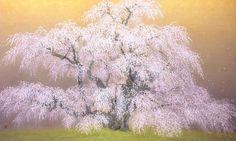 三春瀧桜  2010年-71-野地美樹子