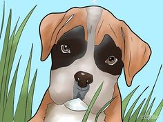 How to Train a Boxer Puppy: 6 Steps (with Pictures) - wikiHow