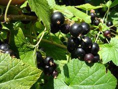 Leto plné ovocia prichádza aj k nám ...  #leto #summer #zahrada #kvety #ovocie #zelenina #kvety #zahrada #garden #gardening #flowers