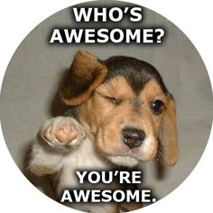 1000+ images about Awesomeness, You're Awesome! on