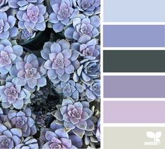Succulent Hues - https://www.design-seeds.com/in-nature/succulents/succulent-hues-22