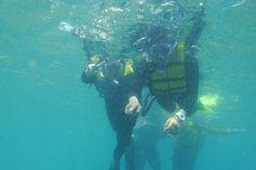 semak daun @pulaubirawa