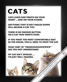 """Cats Poster Print has funny and heartfelt pet sayings that will make you purr! """"Cats leave paw prints on your heart … and on your floors,"""" is just one of the inspirational cat quotes on this poster. W"""