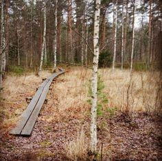 Pitkospuut lenkkireitillä ©kip_4 #pientalojapiha