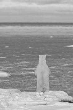white bear - soy parte de este lugar