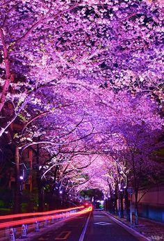 """"""" Sakura Flowers """""""