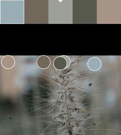 Marrón y gris(1): 71665B/9B9F9A Puntos de color y paleta