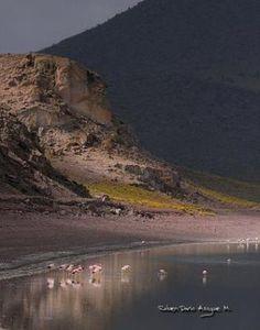 Reserva de Vida Silvestre Eduardo Avaroa. Por: Ruben Dario Azogue - Bolivia