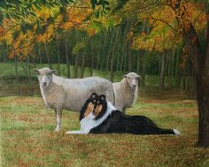 """""""Serenity"""" tricolor collie with sheep.  16"""" x 20"""" watercolor painting, prints available."""