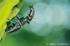 Armature - Marco Colombo wildlife photographer