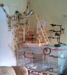 Post Photos Of Your Cage! - Page 120 - Talk Cockatiels Forums, The bird cage is both a home for your chickens and a pretty tool. You can select anything you want on the list of bird cage designs and get a whole lot more specific images. Cockatiel Toys, Cockatiel Cage, Diy Parrot Toys, Diy Bird Toys, Conure Cage, Homemade Bird Toys, Parakeet Care, Diy Bird Cage, Bird Aviary