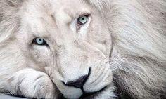 _magnifici-animali-albini__032