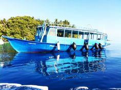 Malediven Delphine, Marina Bay Sands, Building, Travel, Rainy Season, Snorkeling, Maldives, Sunrise, Diving
