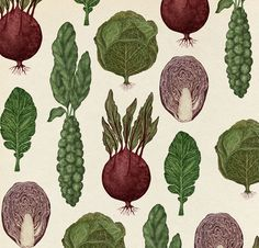 beatpie:  Cabbage Pattern by Katie Scott