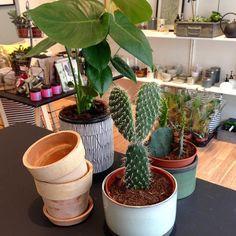 Dagens fangst på Torvet. Sjove kaktusser klassiske Monstera og terracotta krukker. Parat til ugen i Alrum. #livstil #interiør #grønneplanter #kaktus #hverdagsglæde #nyuge #krukker #amagerbrogade #amager by butikalrum
