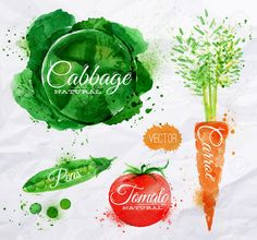 watercolour cabbage - Google Search