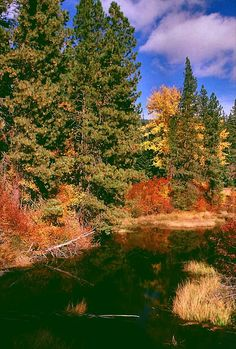 ✯ Autumn On Stevens