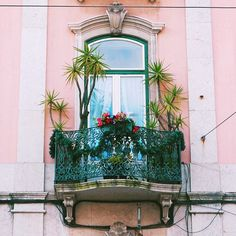 Plz find attached my weekend intentions 🌴💓🌴 . . . . #plantgoals #plantsarefriends #urbanjungle #urbanjunglebloggers #vscoplants #colorhunters #tropicalplants #plantsmakepeoplehappy #plantspiration  #abmlifeisbeautiful #abmlifeiscolorful #jungalowstyle #plantlove  #instaplants #postitfortheaesthetic  #acolorstory #colorhunters #balconygarden #plantsonpink #lisbon #lisbonlovers