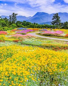 Once we approached the Flores & Prats firm, we wanted to target on the accurate Flores Wallpaper, Natur Wallpaper, Beautiful World, Beautiful Gardens, Wonderful Places, Beautiful Places, Landscape Photography, Nature Photography, Oita