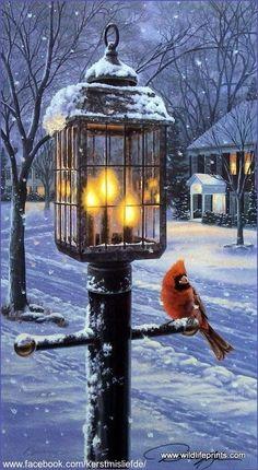 Cardinal sitting on a lantarn in a snowy street. DF,