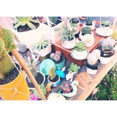 En buena compañía #cactusysuculentas #cactus #cacti #cactuslover #cactilove #suculentas #succulents #succulove #deco #decor #market #malasaña #dosdemayo #dosde #plazadosdemayo #madrid