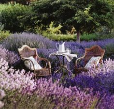 tea time in lavender garden
