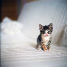 meow by asya baranova