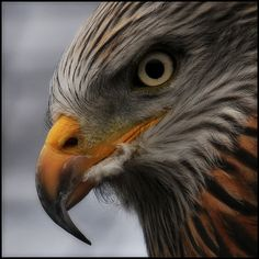 awesome nature photography of birds of prey | ... Bird of Prey Centre.Knutsford.Cheshire | Flickr - Photo Sharing